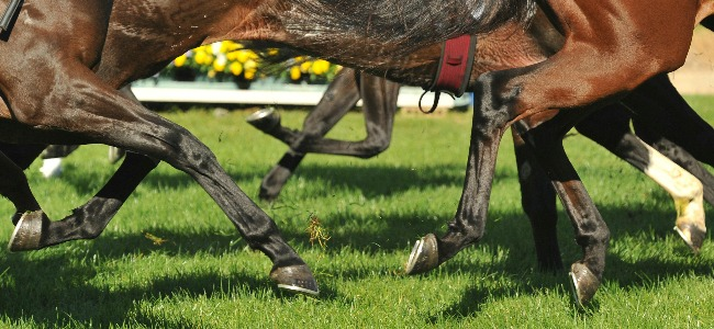 Horseracing Legs