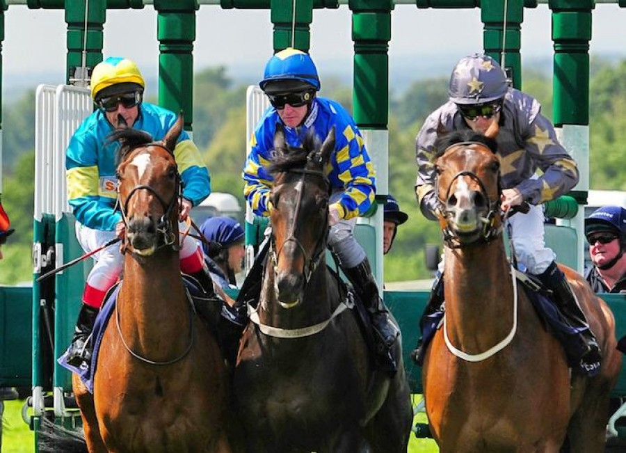 Horseracing out of the gates